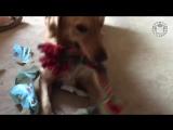 Домашние животные открывают рождественские подарки