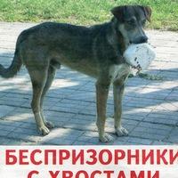 """Логотип Нужны волонтёры """"ТВОЙ ШАНС"""""""