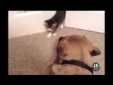 Страшнее кошки зверя нету