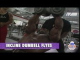 FLEX WHEELER - INCLINE DUMBBELL FLYES