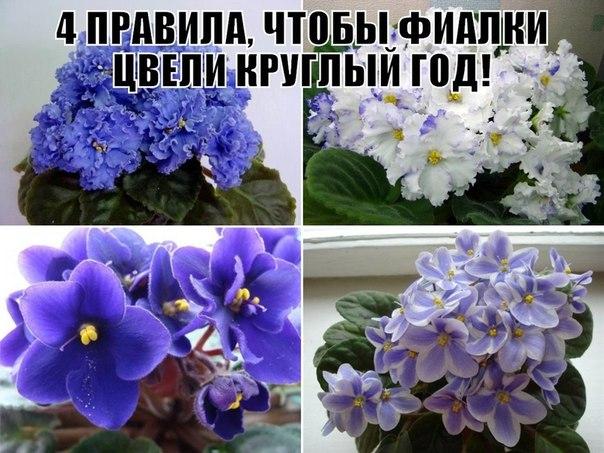 http://cs620118.vk.me/v620118115/7f84/OMISxmGNqV0.jpg