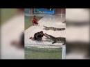 Крокодил чуть не откусил руку дрессировщику