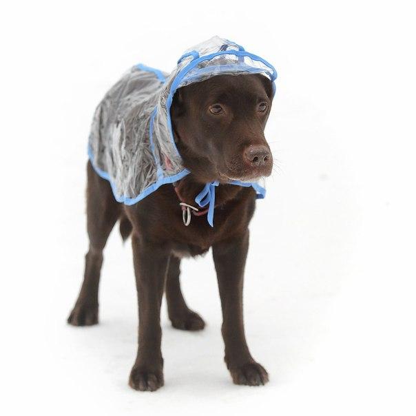 OSSO Fashion - лучшие товары для животных,дрессировки,спорта XNyYevUtsbY