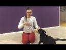 Урок с киноголом - щенок лабрадора ретривера 2 мес.
