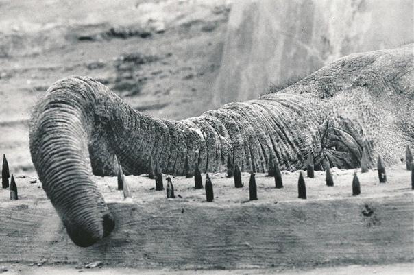 Побеги животных из Московского зоопарка «Хроника» побегов составлена по мемуарам и устным воспоминаниям сотрудников, поэтому в деталях описания могут быть неточными. Начало 1920-х годов. Слон