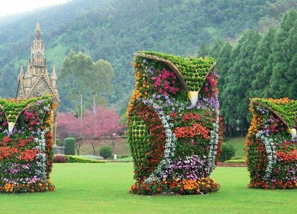 Совы из цветов, Тайвань