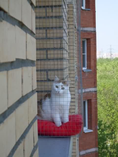 Сетка на окно для кошек своими руками 57