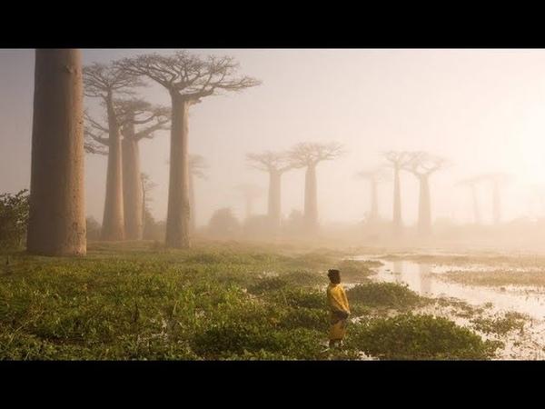 Молодой каменный лес. Мадагаскар.