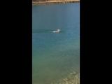 Мой День - Первый раз вижу зайца переплывающего реку💦🐰