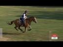 Будённовский жеребец Иприт чемпионат мира по троеборью