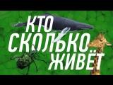 СРОК ЖИЗНИ ЖИВЫХ СУЩЕСТВ. ОТ МИНУТ ДО БЕССМЕРТИЯ (1080p FullHD)