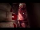 «Слабый пол» |2017| Режиссер: Николя Жаке | анимация, короткометражный (рус. субтитры)