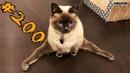 Смешные коты и котики, приколы про котов до слез - Смешные кошки - Funny Cats