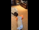 Последнее видео моей любимой собаки Пуншика