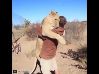 Животные любят обниматься