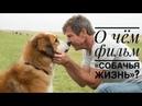 Жизнь после смерти есть! Впечатления от фильма «Собачья жизнь»