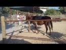 Хасуначка знакомится с лошадкой♡♡♡