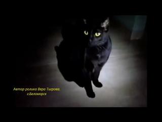 Булат Окуджава - Песенка про черного кота.