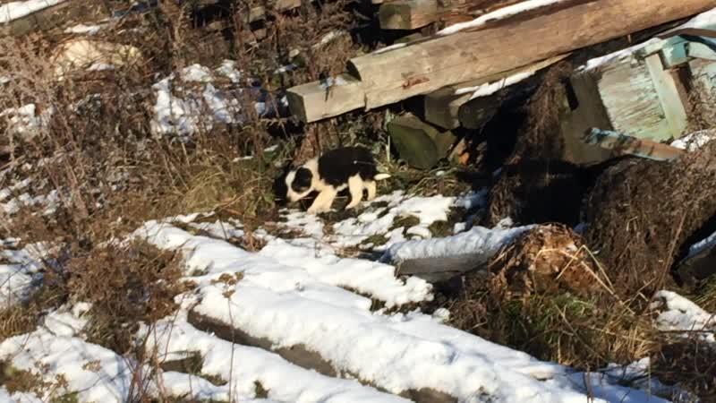 Мимимишные пёси в Горбуново (Нижний Тагил)