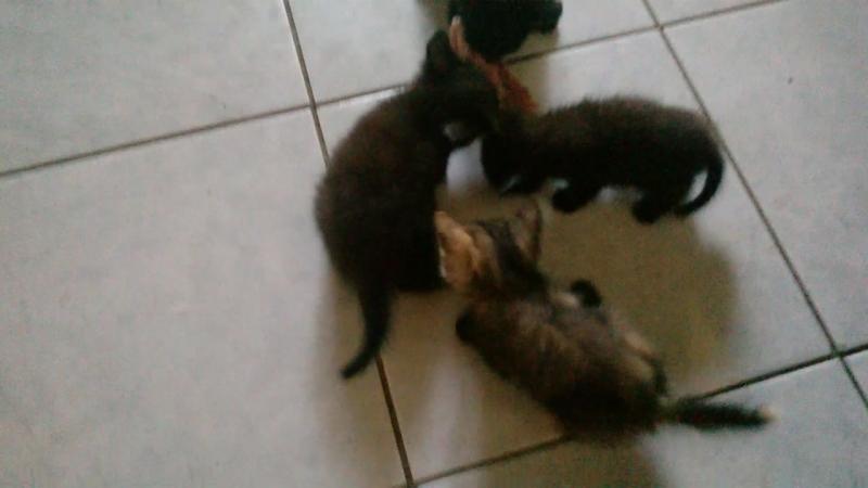 2018-07-20 08-12-26Мои котятки давно уже вовсю кушают куринные косточки