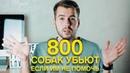 800 СОБАК МОГУТ УСЫПИТЬ, ЕСЛИ ИМ НЕ ПОМОЧЬ