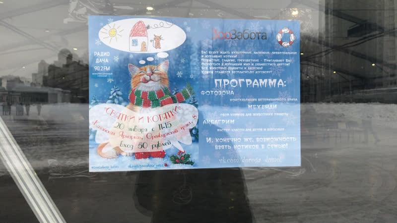Выставка кошек «Святки и котятки» в Казани