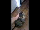 мой ласковый котейка