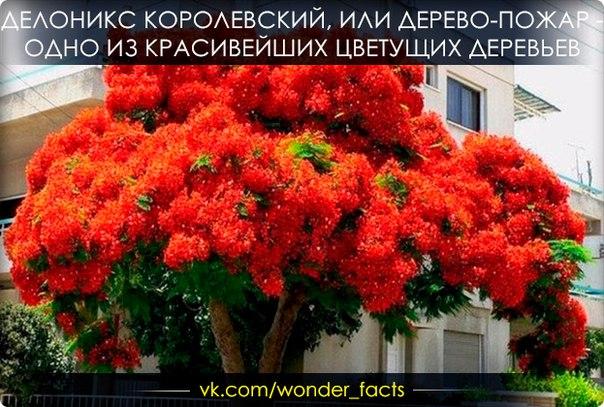 https://pp.vk.me/c543106/v543106258/1038f/OlOOzx0qQ9A.jpg
