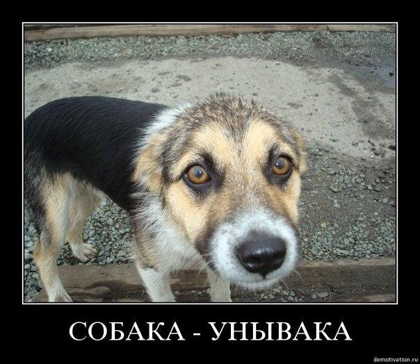 Собака-унывака