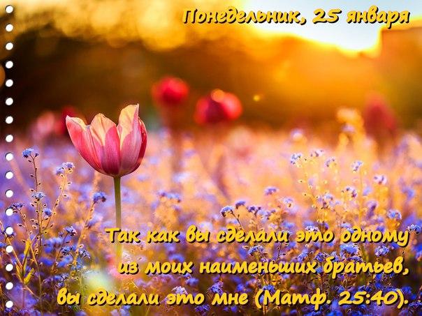 Исследуем Писания каждый день 2016 24NSfKURr4s