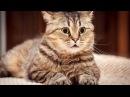 Смешные Коты и Кошки 2017 ТОПовая Подборка. Лучшие Приколы с котами. Funny Cats 2017 1