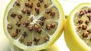 Необычное свойство лимона: вы этого не знали!