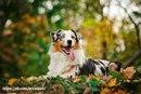Чем лучше управляется собака, тем больше свободы ей можно дать.