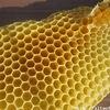 Алтайский пчеловод