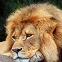 Sergey Lion, 26 июня , Вологда, id13715438