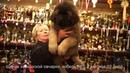 Питомник Кавказских овчарок, продает щенков 2 месяца. www.r- 7 9262205603 Татьяна Ягодкина