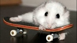 Funny Hamsters Videos Compilation #4 Cute And Funniest Hamster