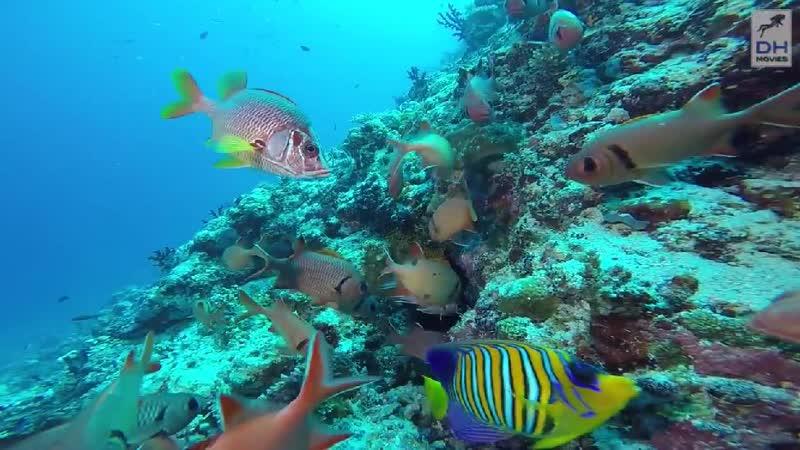 Остров Батала-Мальдивы - (Расширенная версия) HD