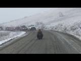 Настоящий хозяин Аляски - медведь устроил пробку на дороге 🐻