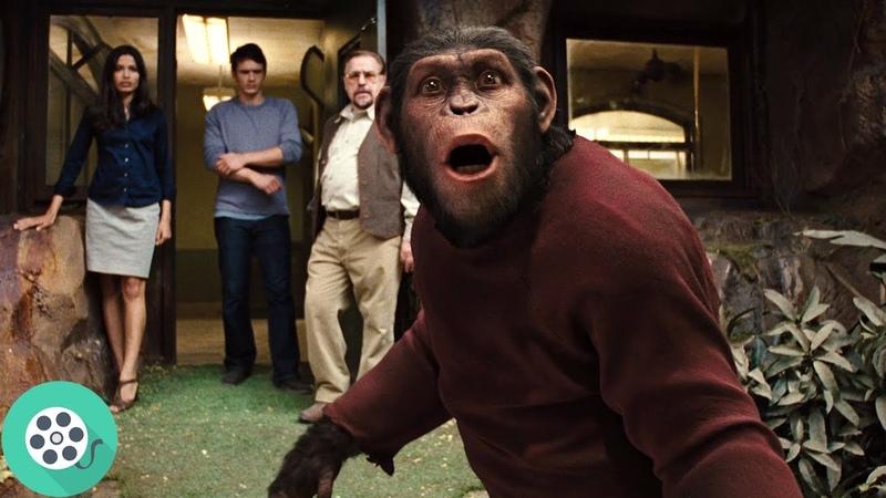 Цезаря отдают в приют приматов. Восстание планеты обезьян (2011) год.