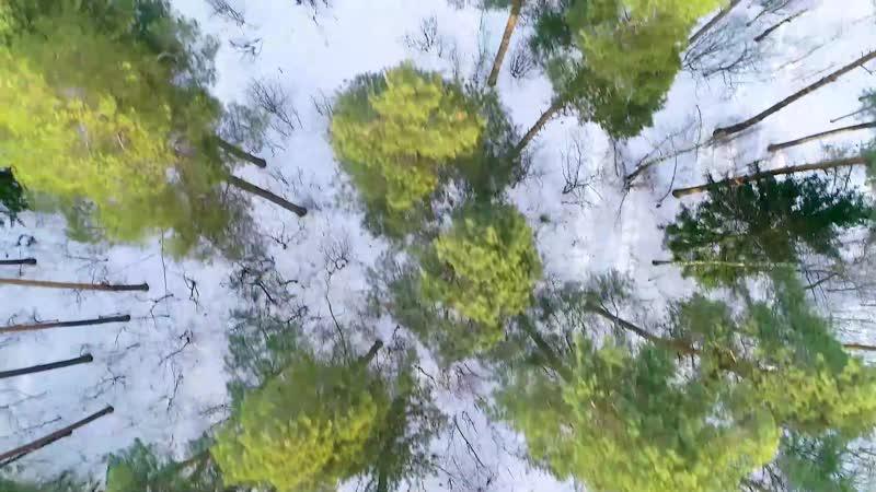 Парковский лес г.о. Орехово-Зуево