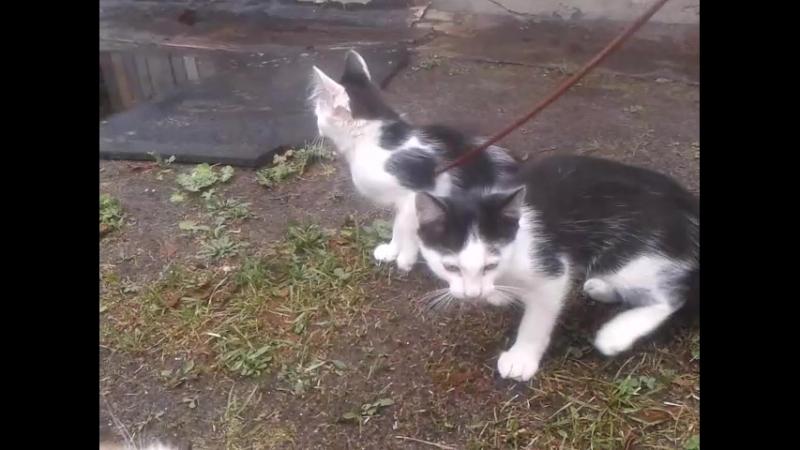 Дачные котятки 3