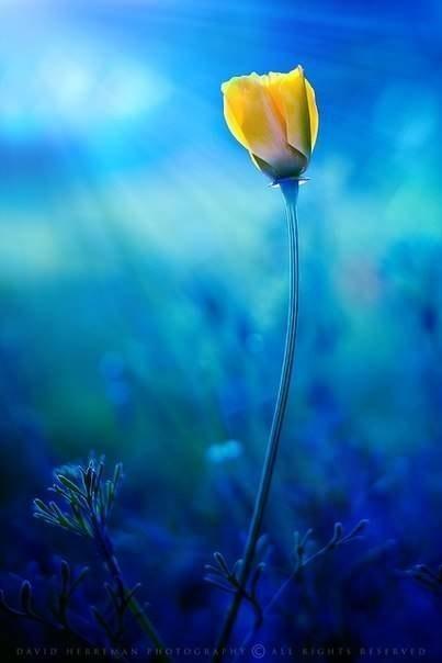 Протягивая руки к звездам, люди часто забывают о цветах под ногами.  — Д.Бентем
