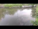 Природа сосково река вода почему грязи 18 06 2018
