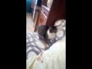 Кошка псих😾
