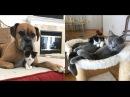 Котенок, спасенный от усыпления, повсюду искал маму… Его усыновили собака и кот!