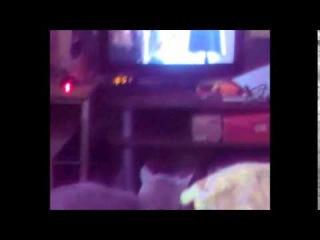 Кошка смотрит сериал
