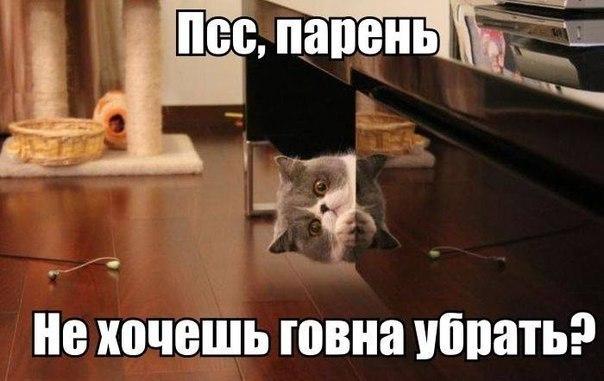 http://cs313428.vk.me/v313428098/9193/bQMx7QGThWo.jpg