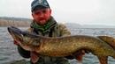 КЛЮЮТ КРОКОДИЛЫ Щуки 6 5 4 кг на одной рыбалке Крупная щука на крупные приманки поздней осенью