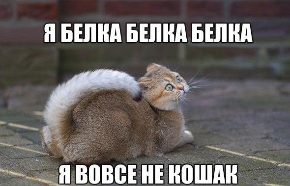Украина не видит возможности менять Соглашение об ассоциации с ЕС, - Климпуш-Цинцадзе - Цензор.НЕТ 2691